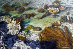 Sand on The Coral Floor, 2009